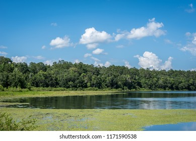 Beautiful Florida Lake