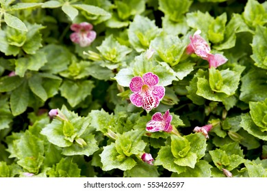 beautiful flower - Shutterstock ID 553426597