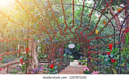 Beautiful flower arches and walkway in garden