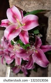 Beautiful flower arrangement of large-headed pink Oriental lily