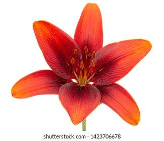Asian Flower Smell Images, Stock Photos & Vectors | Shutterstock