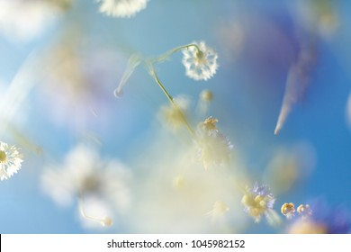 The beautiful flower background. Amazing view of bright white flowers blooming in the garden at the middle of sunny spring day with green grass and blue sky landscape.
