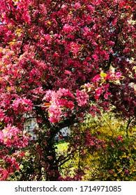Schöner floraler Hintergrund, Naturfoto