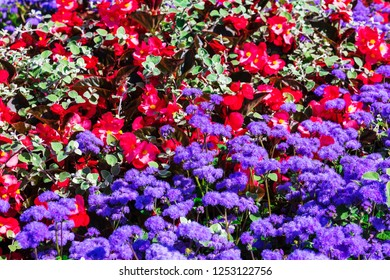 beautiful flower bed with purple and red flowers