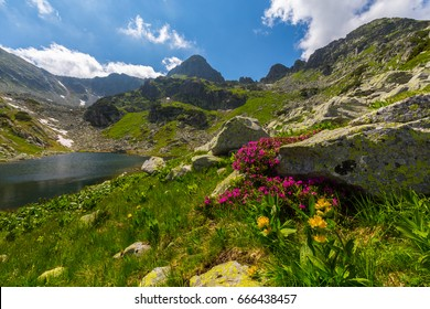 Beautiful flower blossoms in the mountains, in summer