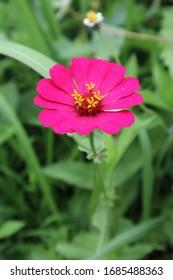 Beautiful flower Bokeh  in the garden
