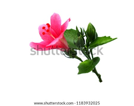 Beautiful Flower Bouquet Hibiscus Flowers Chinese Rose Stock Photo