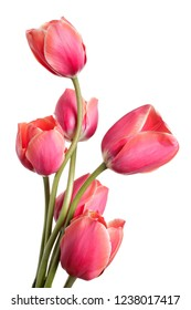 Beautiful Flower bouquet. Tulips isolated on a white background