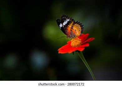Beautiful flower and butterfly
