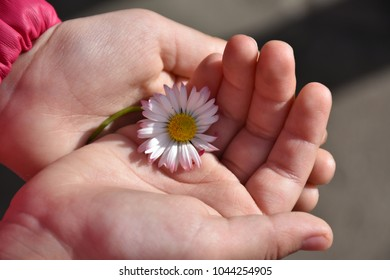 beautiful flower in a child's hand