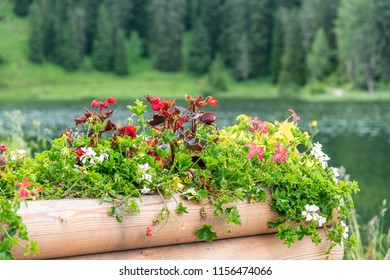 Beautiful flower composition in alpine landscape and lake.