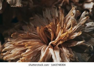 a beautiful flower dead in the dark