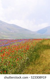 Beautiful flower field on the mountains