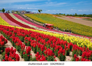 beautiful flower fields in biei area