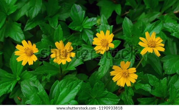 Beautiful Flower Flowers Wallpapers Desktop Backgrounds Nature Stock Image 1190933818