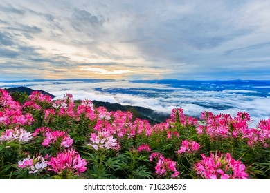Beautiful flower and fog on the view of mountains, winter landscape