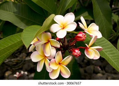 A beautiful flower found on the Big Island of Hawaii