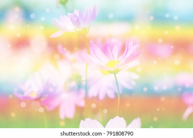 beautiful flower in garden with color effect. subject is blurred.