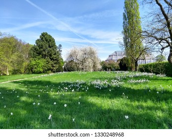 Beautiful flower garden in the spring. Most florid and romantic season of the year. Blossoming of flowers in the park. Colorful flowers in spring. - Shutterstock ID 1330248968
