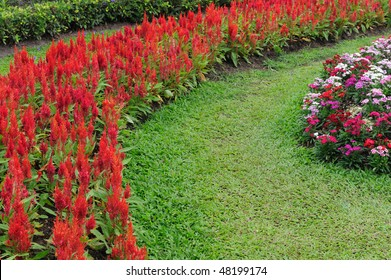 Beautiful Flower in the garden with walking path