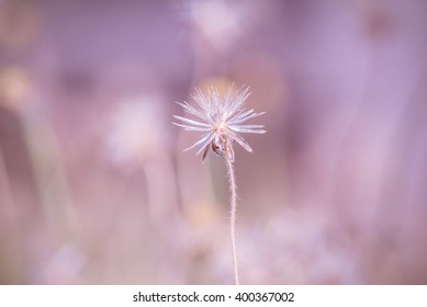 Beautiful flower grass nature background made with color filters. Soft focus