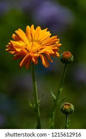 beautiful flower in harsh light in summer time