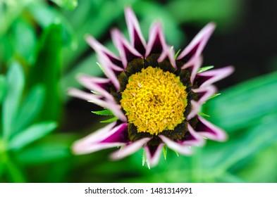 Beautiful flower head like a star close up