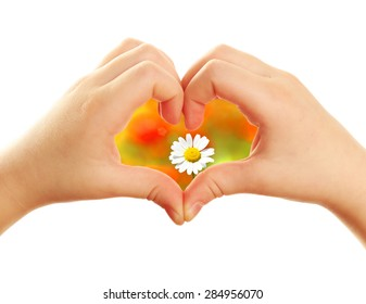 Beautiful flower in heart formed by child hands isolated on white