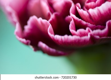 Beautiful flower in macro closeup