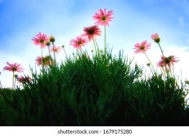 Schöne Blume in der Natur auf blauem Himmel