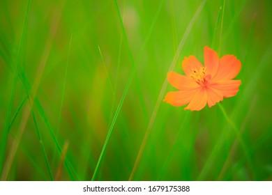 Schöne Blume in der Natur auf grünem Hintergrund