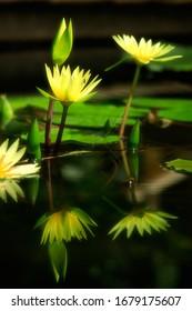 Schöne Blume in der Natur mit Reflexion