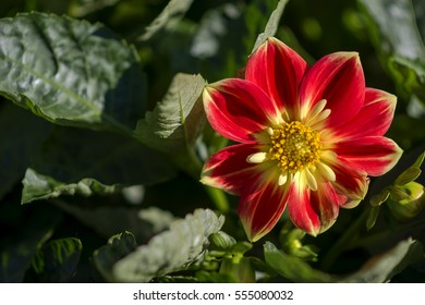 beautiful flower in the north of Thailand - selective focus