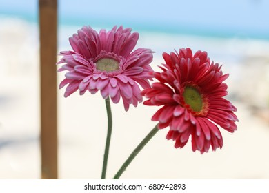 beautiful flower on the beach background