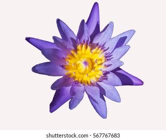 Beautiful flower on isolated background