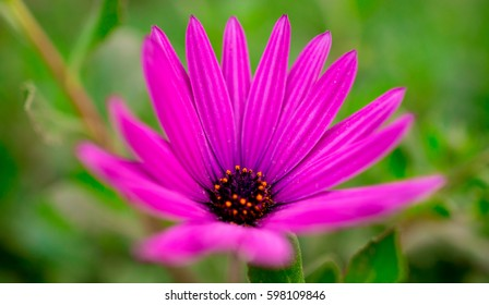 A beautiful flower on the nature in Tunisia