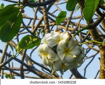 A beautiful flower on a tree