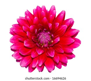 Beautiful flower on white background