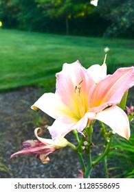 Beautiful flower in park