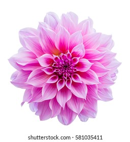 Beautiful flower pink color isolated on white background, Clipping path included