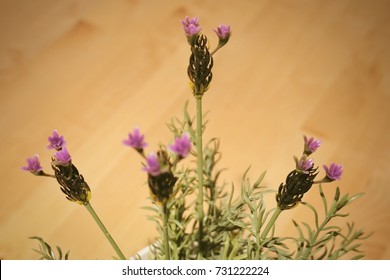 Beautiful Flower, Purple Artificial Lavender or Lavandula Flowers for Home and Building Decoration.
