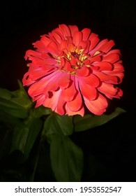 beautiful flower redrose in background