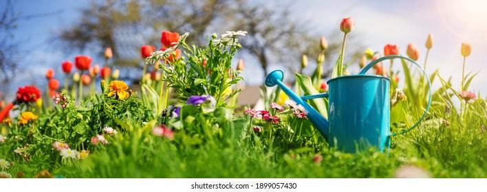 Schöne Blütenpflanzen wachsen im Boden im Garten. Wasser kann auf der Erde stehen. Gartenbau-Hobby-Konzept.