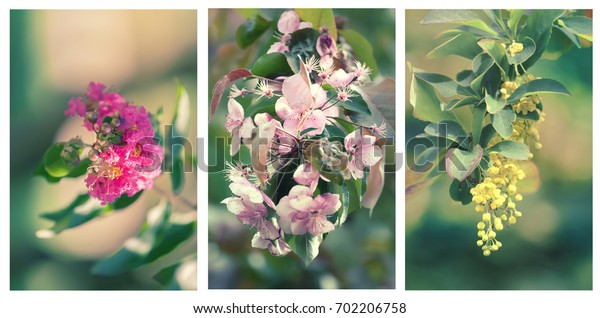 Beautiful flower set for background - Vintage