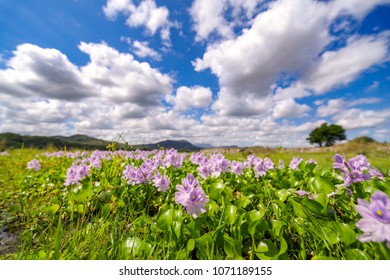 beautiful flower and sky in Mt.Pinatubo, Philippines