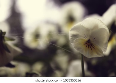 A beautiful flower in the spring with a blurry background.
