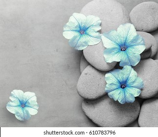 Beautiful flower and stone zen spa on grey background