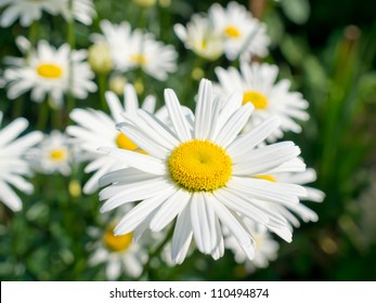 Beautiful flower in the summer