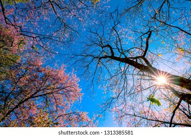 A beautiful flower tree on blue sky background with sunshine.