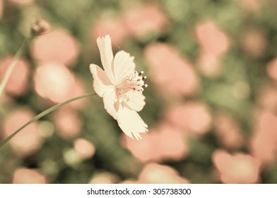 beautiful flower with vintage color style